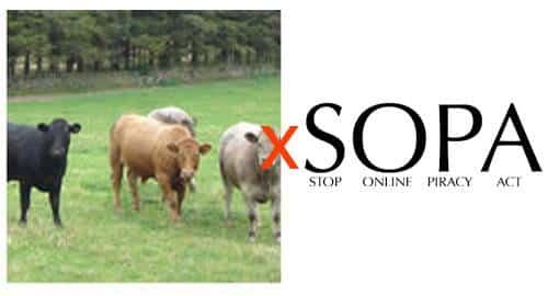Sopa x SOPA