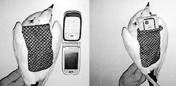 Pombos transportando celular para penitenciária