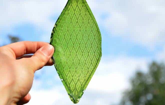Primeira folha feita pelo homem converte gás carbônico em oxigênio