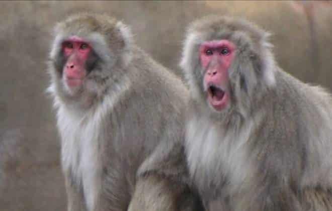 Zoológico quer usar esterco de animais para gerar energia