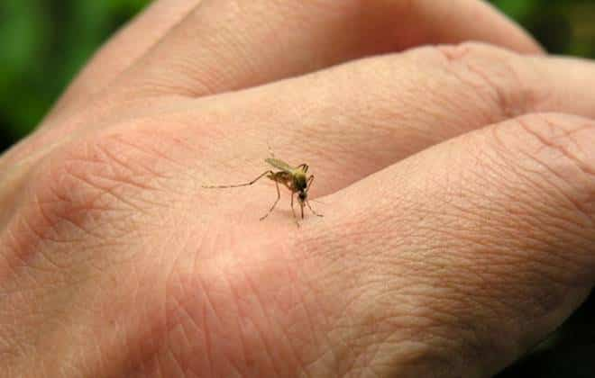 Confirmada primeira morte por dengue de 2016 no Rio de Janeiro