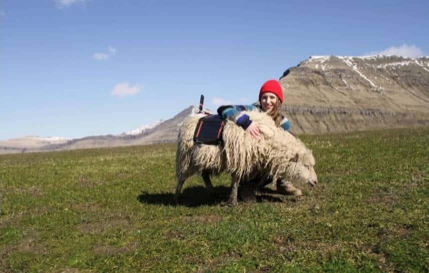 Google Sheep View: Google instala c�meras em ovelhas para mapear ilhas remotas