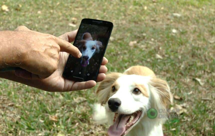 Saiba como tirar boas fotos com o smartphone