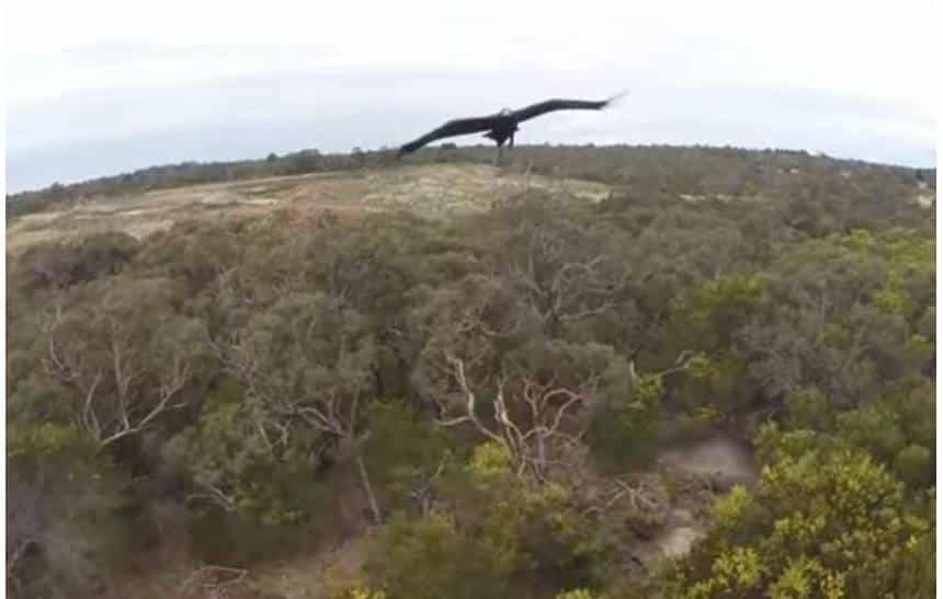 Águias destruidoras de drones já fizeram fotógrafo perder quase R$ 250 mil