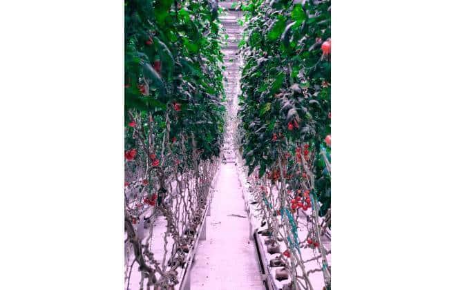 20200210064209_860_645_-_80_acres Robôs 'fazendeiros' mudam o futuro da agricultura
