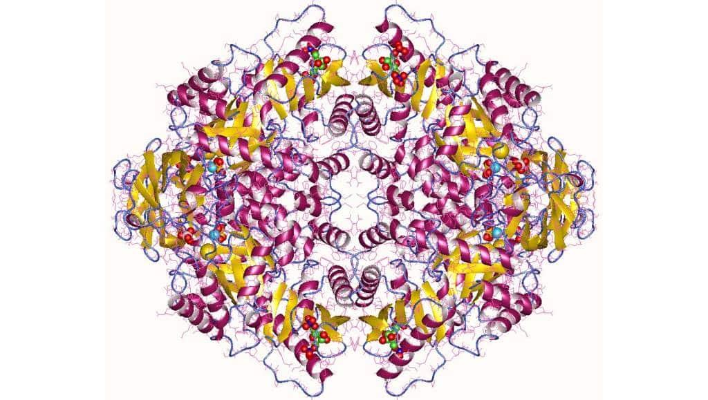 Reprodução / Protein Data Bank