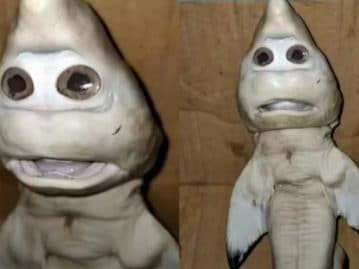 Shark with a 'human' face? Indonesian fisherman encounters strange creature