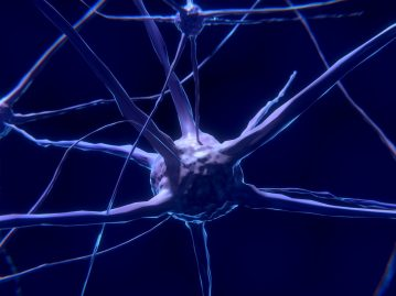 Protein identifies neurons most vulnerable to Alzheimer's